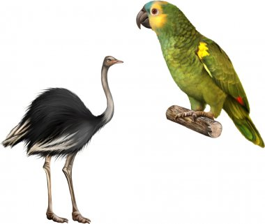 green Parrot and ostrich