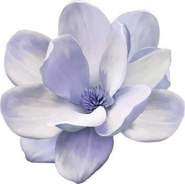 Blue Magnolia flower