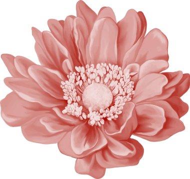 Pink Mona Lisa flower