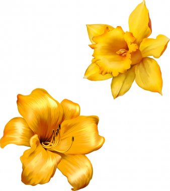 Yellow lily and  Daffodil flowers