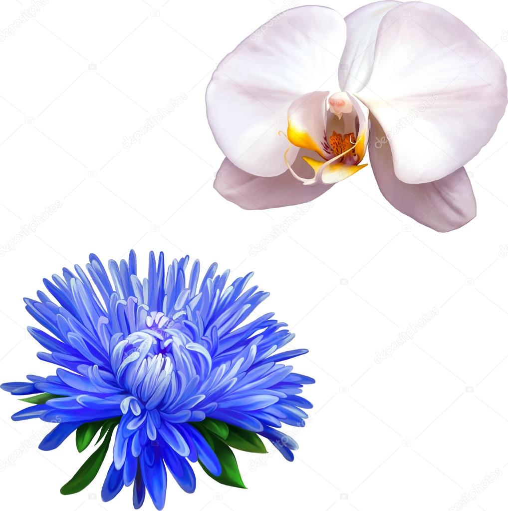 White Orchid And Blue Aster Flowers Stock Vector Artnature 69815395