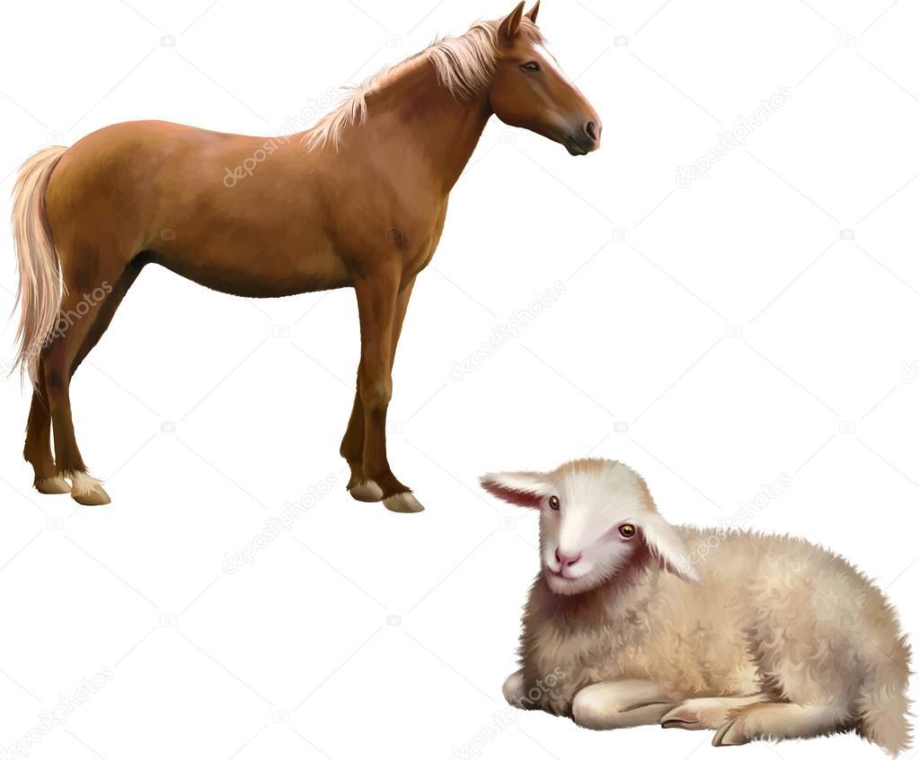 Mixed breed horse and lamb