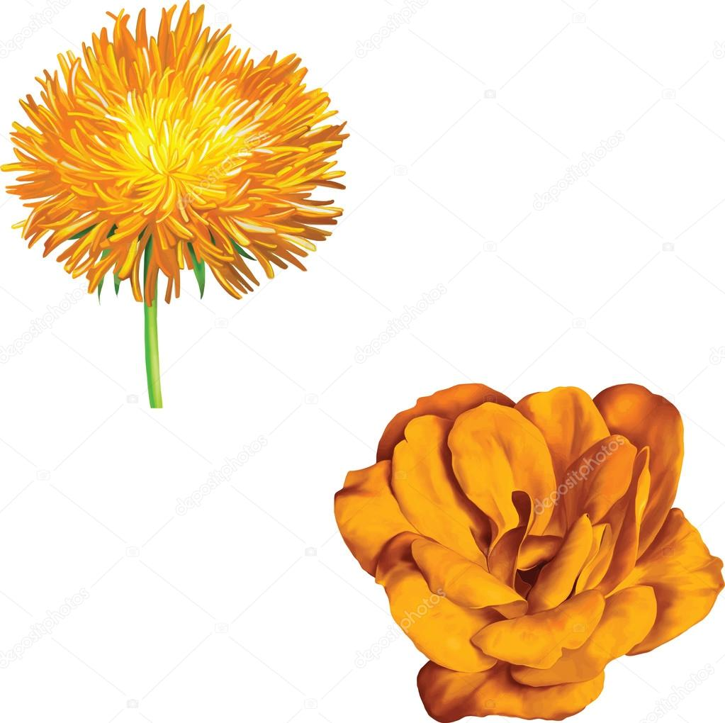 Yellow thistle aster flower and camellia stock vector artnature yellow thistle aster flower and camellia stock vector mightylinksfo