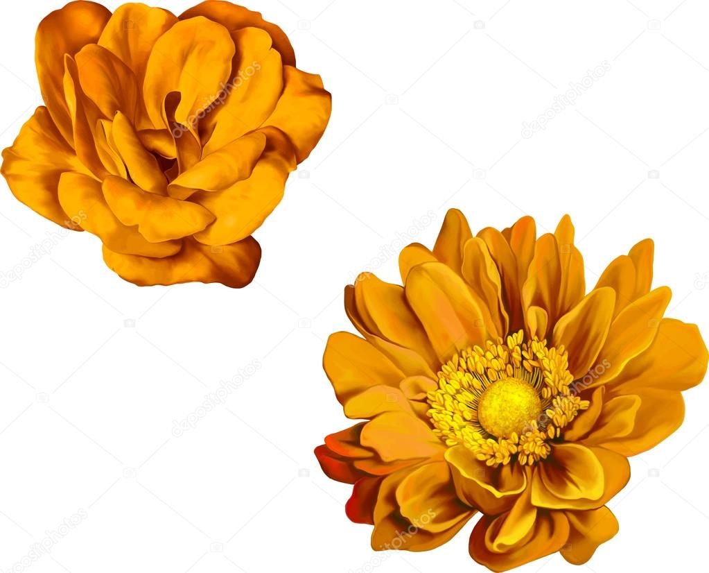 Yellow Rose Flowers Stock Vector Artnature 69819345