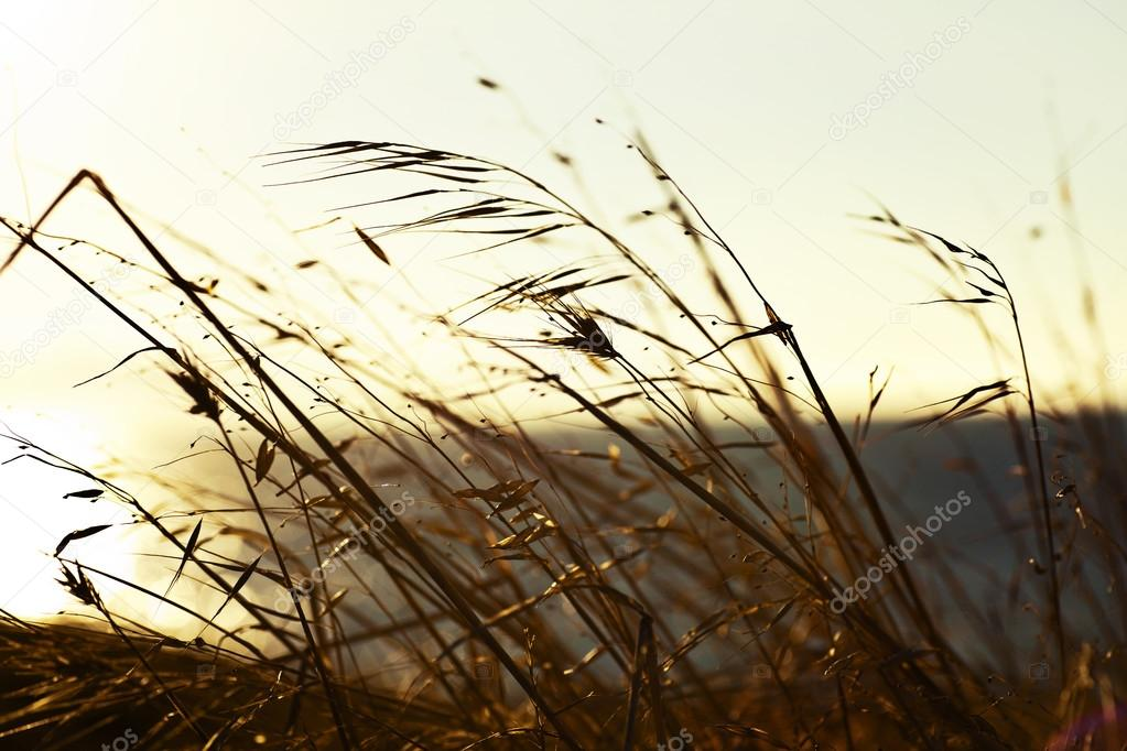 Field grass background.
