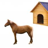Fotografie Mixed breed horse standing, old wooden dog house, illustration isolated on white background