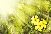 Žluté květy a slunce