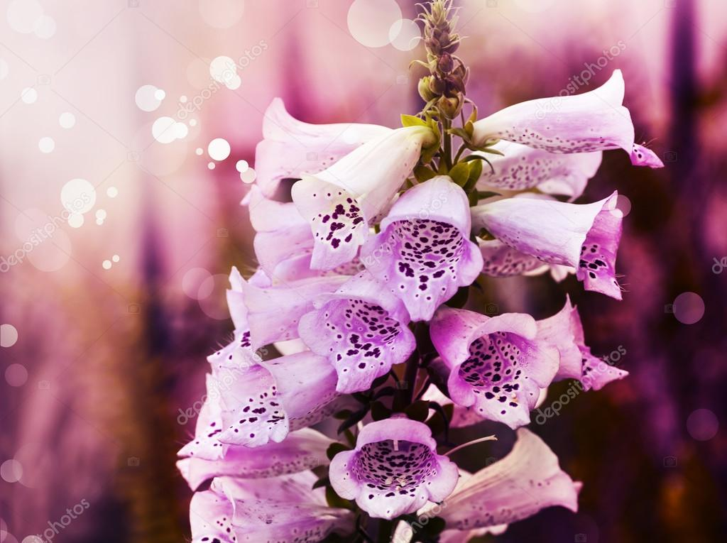 White and pink bell flowers stock photo artnature 80983584 white and pink bell flowers stock photo mightylinksfo