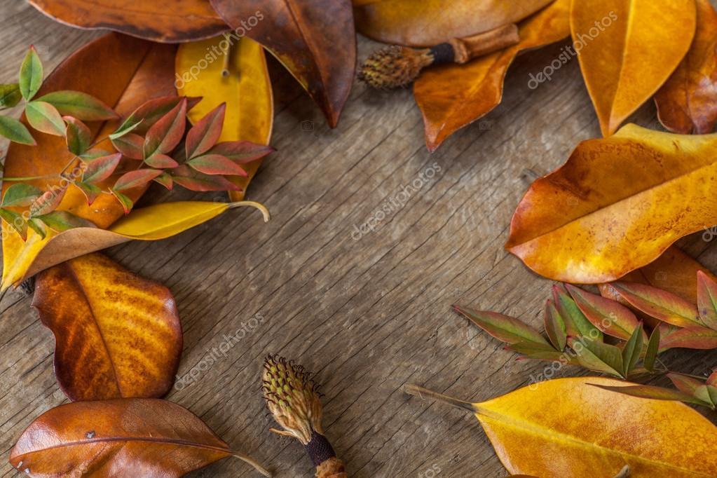 autumn background with leaves stock photo artnature 80985046