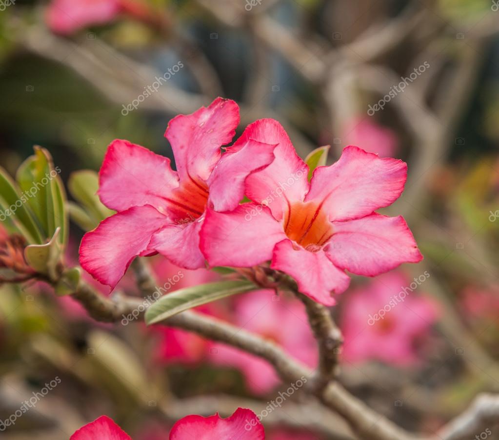 Flor De Primavera Rosa Fotos De Stock Artnature 80986618