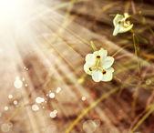 Virág vad iris