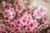 Fényképek rózsaszín virágok háttér