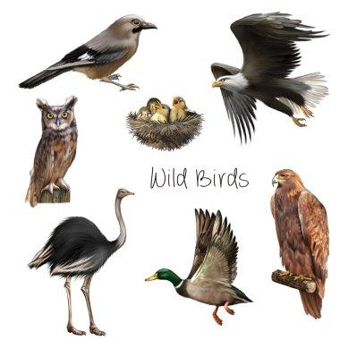 Wild birds  isolated on white background.