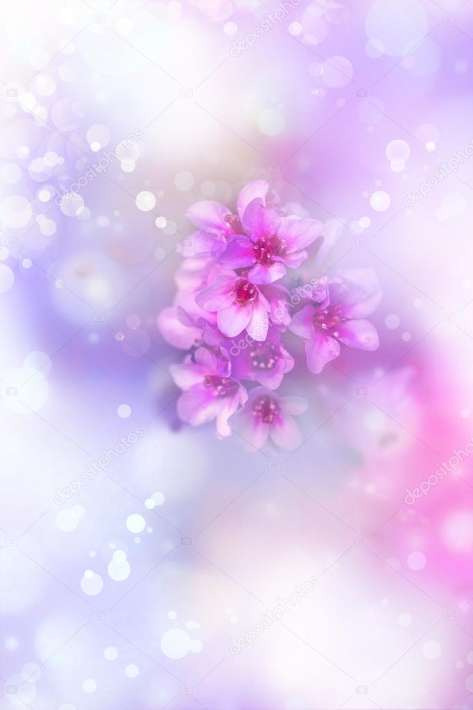 Pink Purple Flowers Background Stock Photo Artnature 81200084