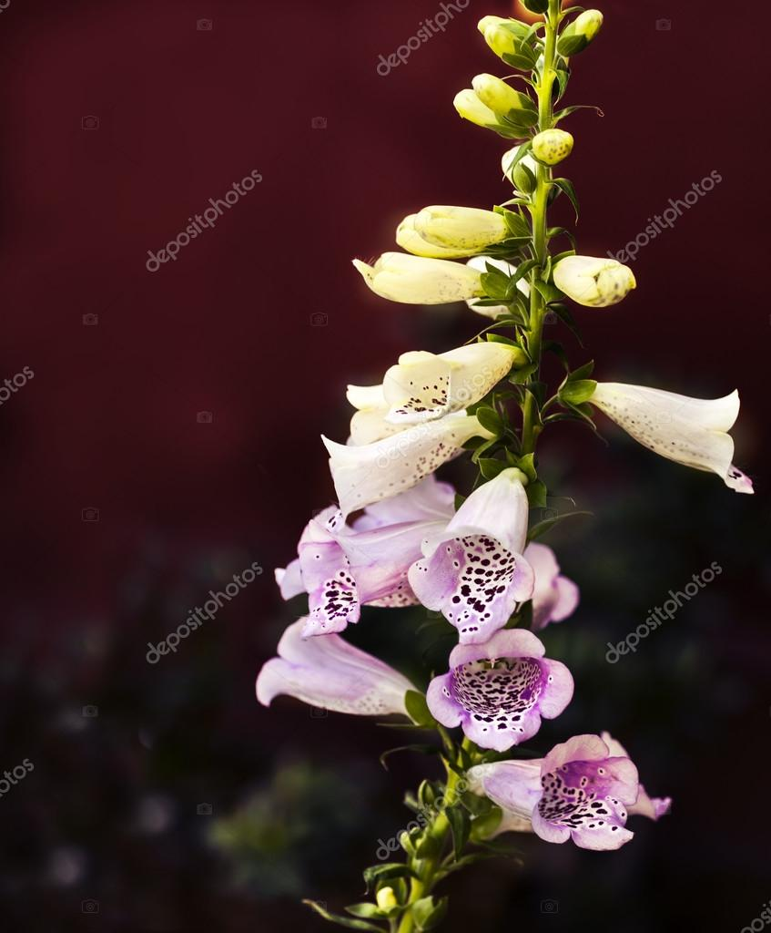White And Pink Bell Flowers Stock Photo Artnature 81759476