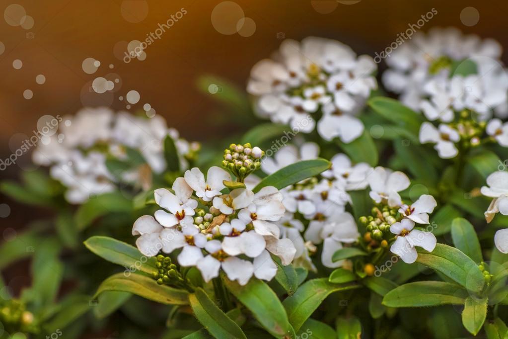 kleine weiße blumen — Stockfoto © artnature #81759716
