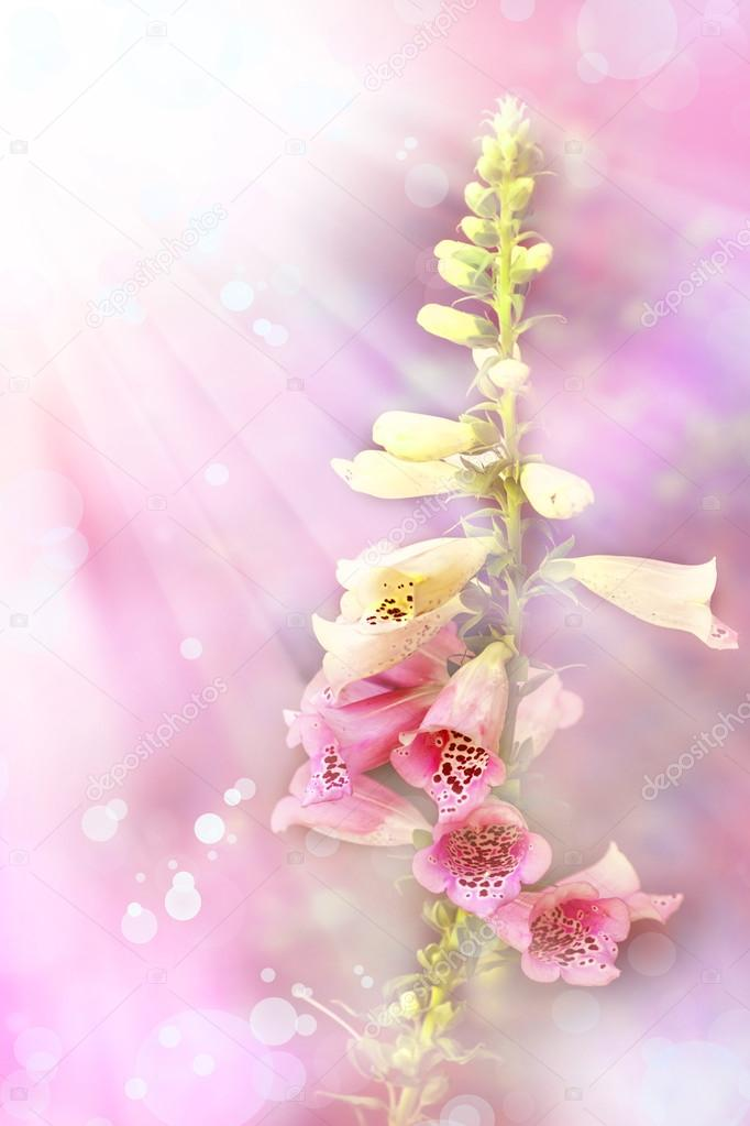 White and pink bell flowers