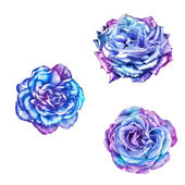 Photo bright Rose Camellia Flowers