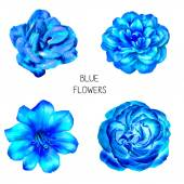 Fotografie Blue flowers isolated on white background