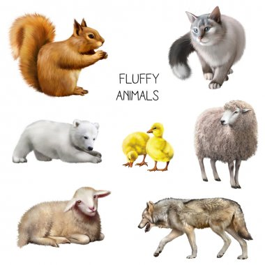 Fluffy animals isolated on white background