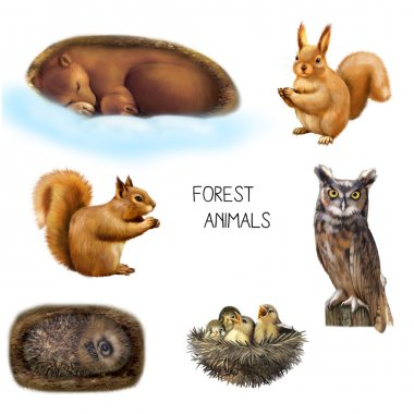 Illustration of forest animals