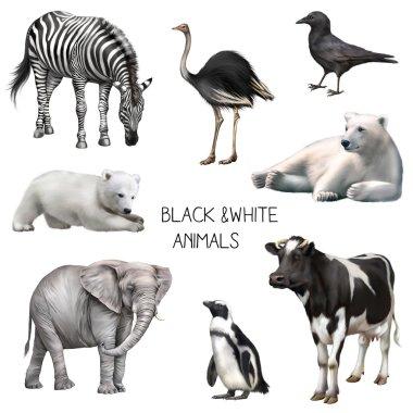 Black and white animals isolated on white background