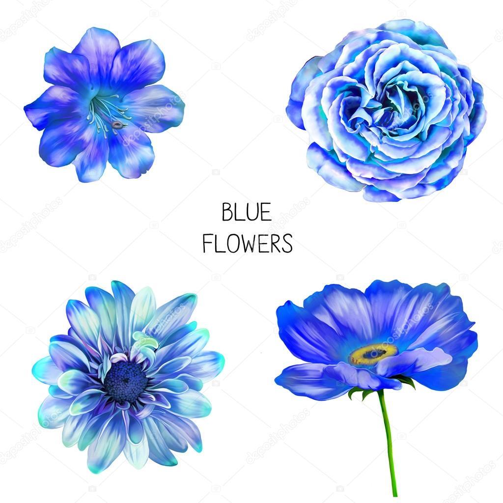 Set Of Beautiful Blue Flowers Isolated On White Background Photo By Artnature