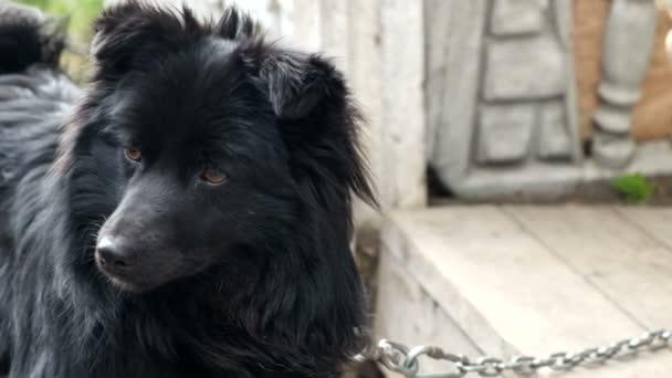 Fekete kutya-ra egy lánc