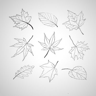 Leaves outline