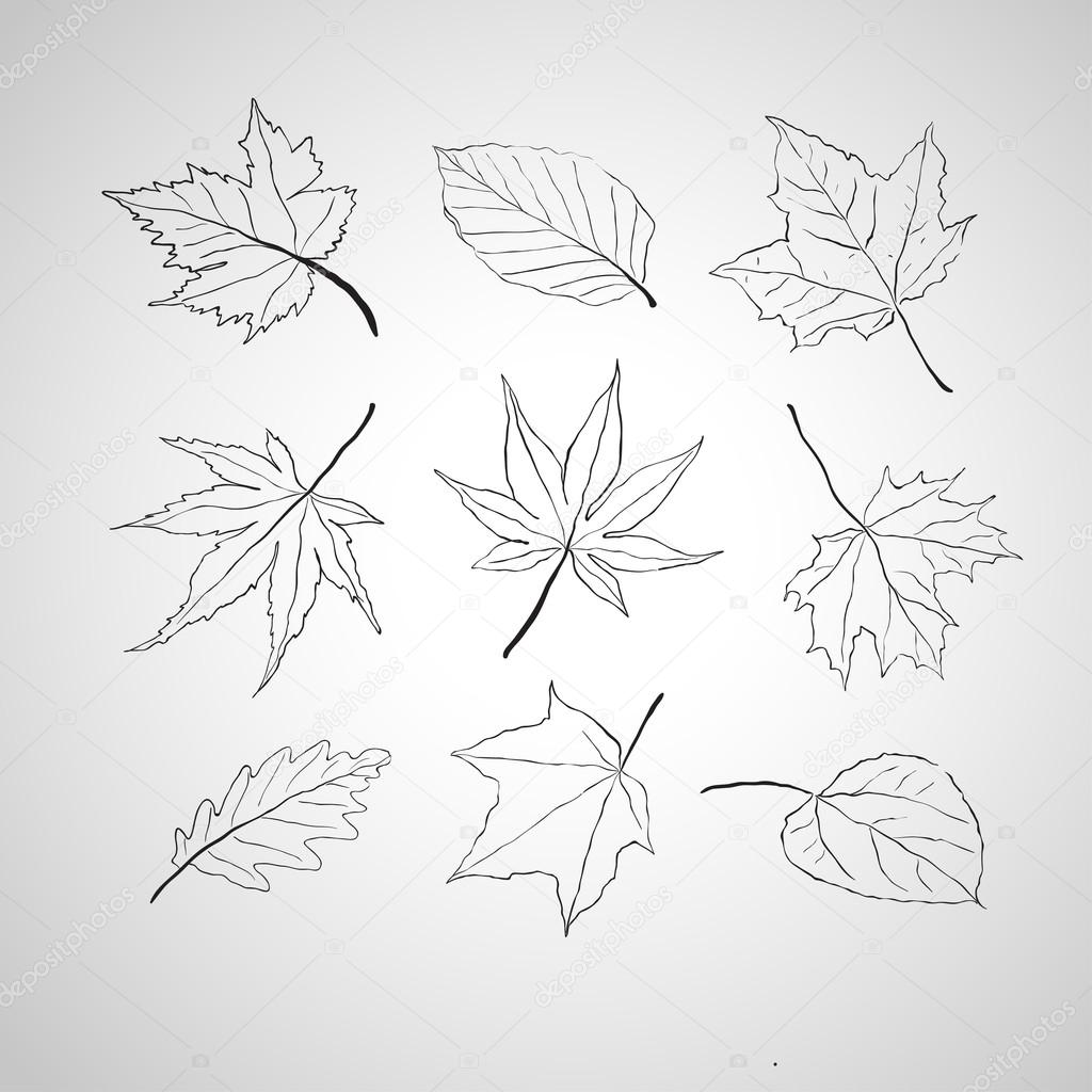 Leaves outline