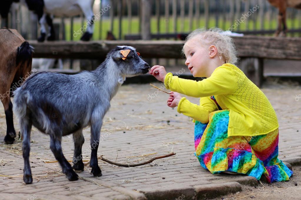 Toddler girl petting little goat