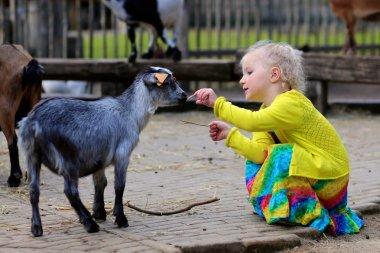 girl petting little goat