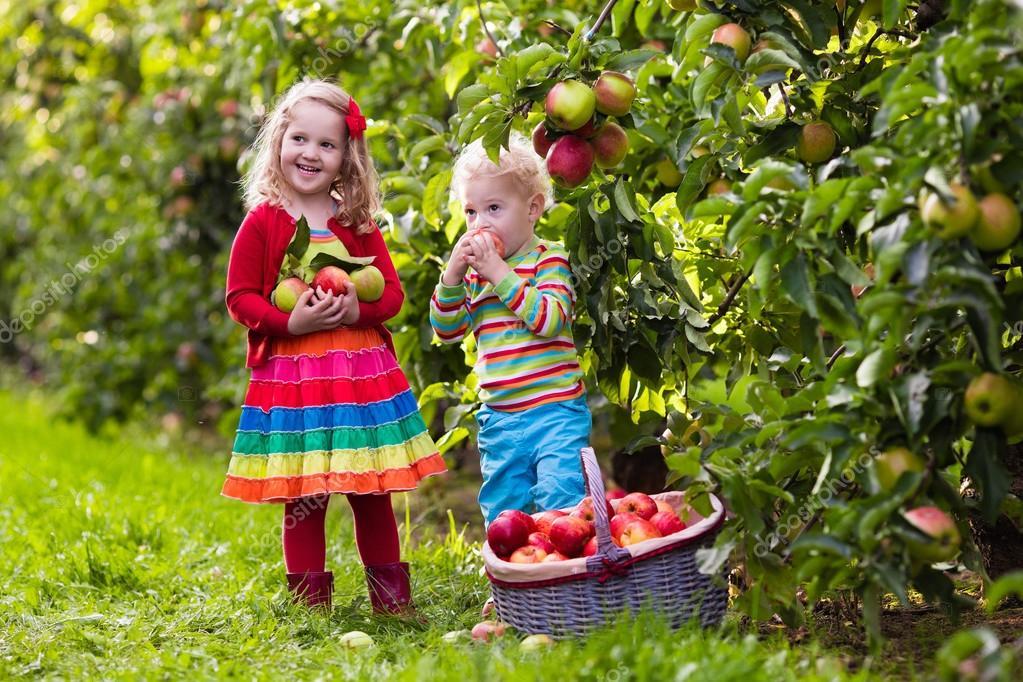 Дети и яблоки 97