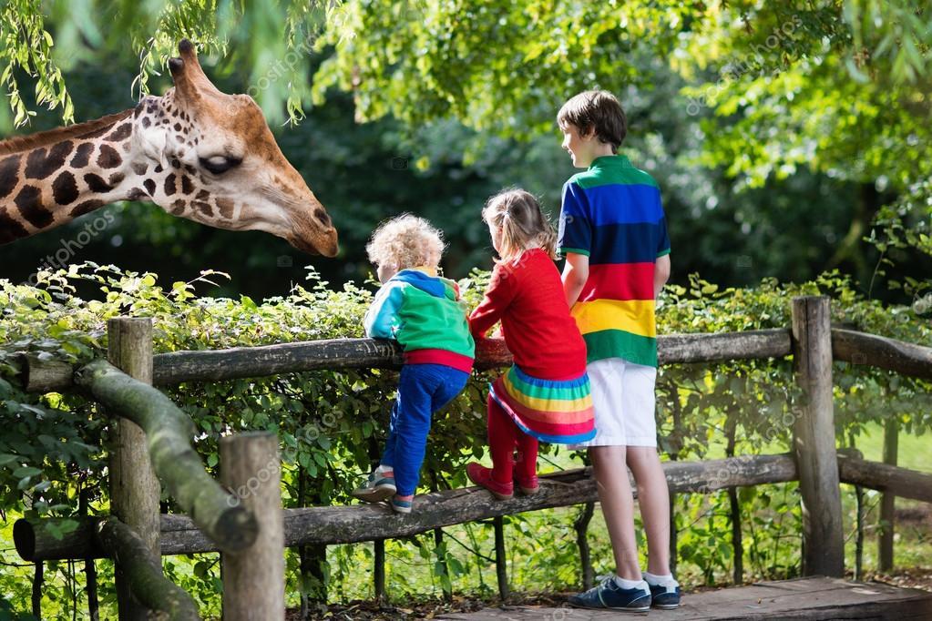 Kids feeding giraffe at the zoo ⬇ Stock Photo, Image by © FamVeldman  #119874070