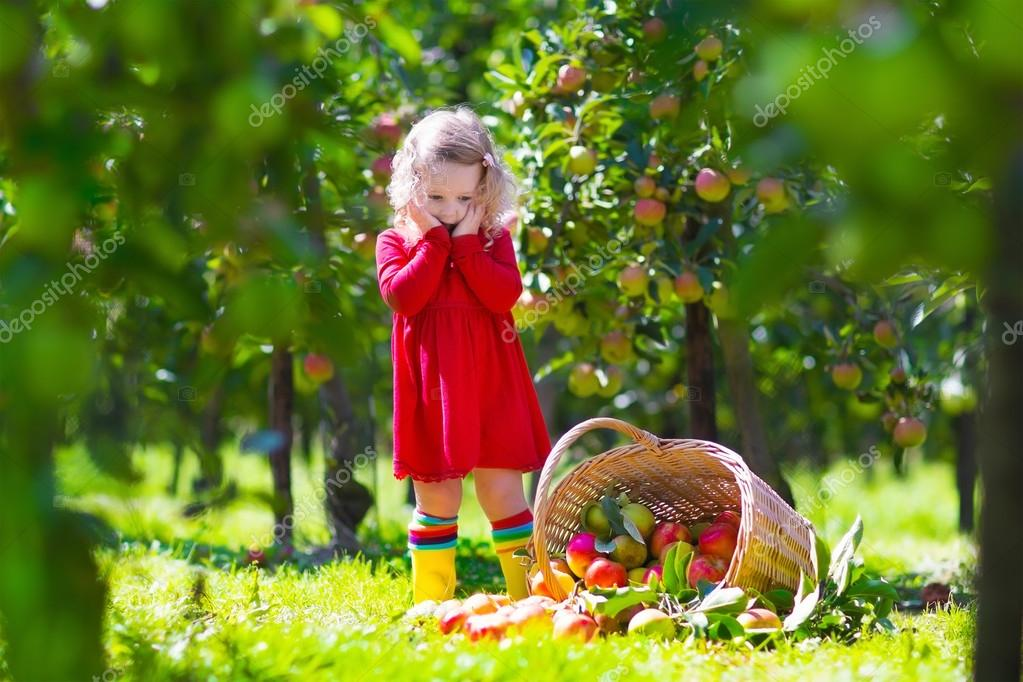 Little girl looking at tipped over apple basket