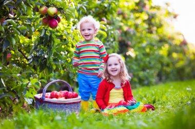 Kids picking fresh apples from tree in a fruit orchard