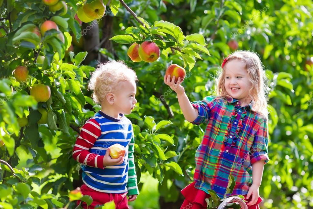 Дети и яблоки 100