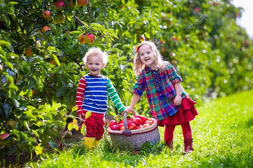 Дети и яблоки 20