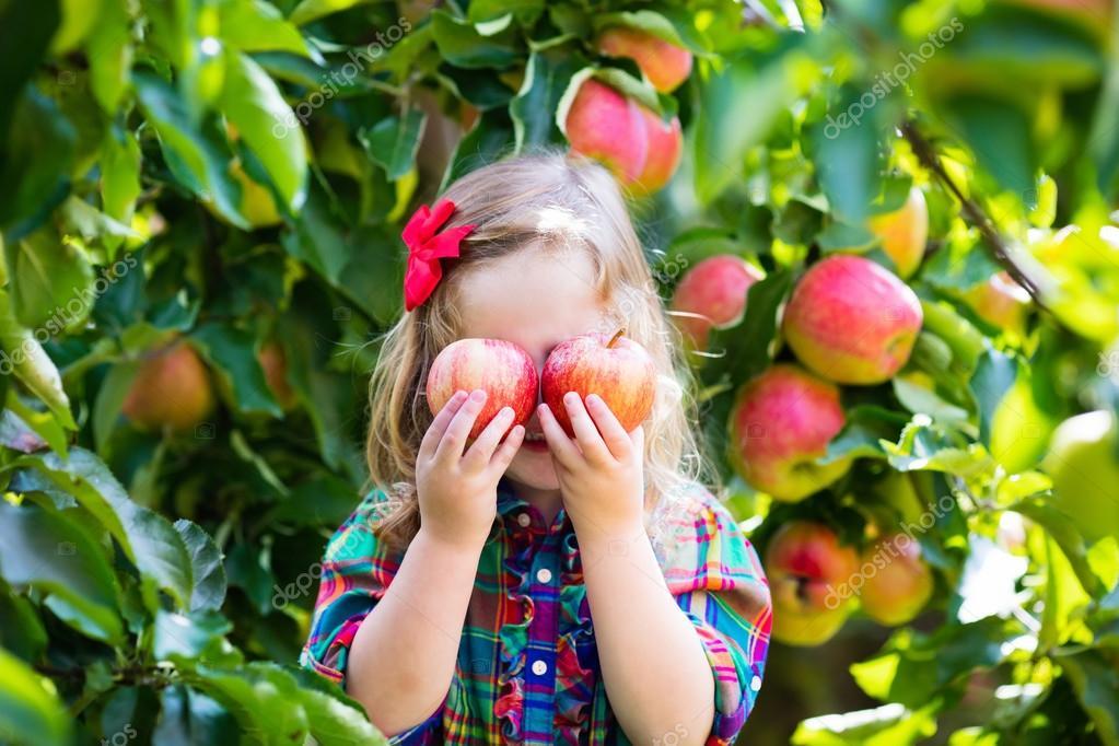 Картинки дети срывают яблоки