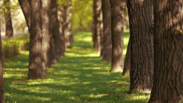 Avenue, a fák