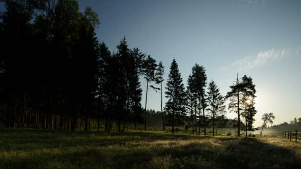 Dawn in the forest time-lapse