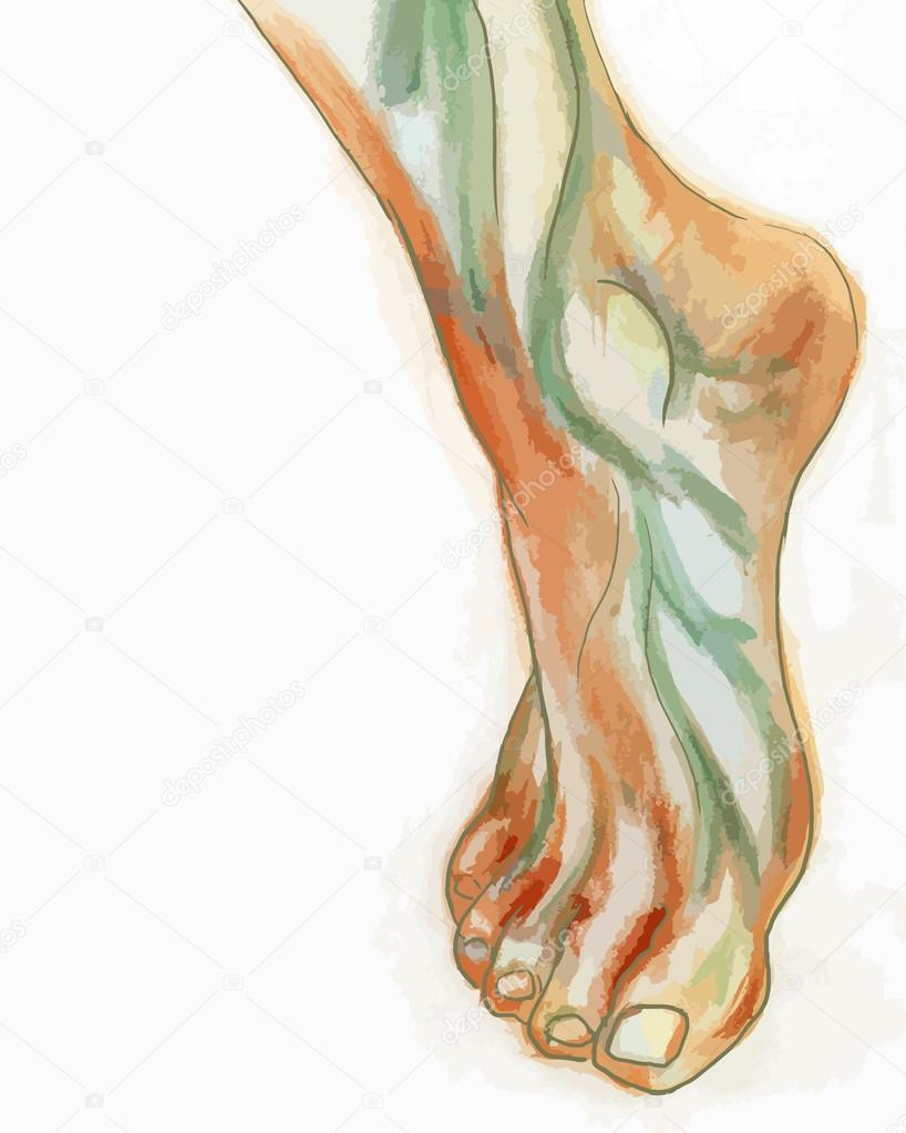 Dessin De Pied Humain aquarelle dessin du pied humain — image vectorielle juliamusdotter