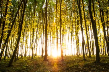 Nature. Beautiful morning scene in the forest with sun rays and long shadows