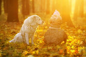 Child and dog in fabulous autumn forest