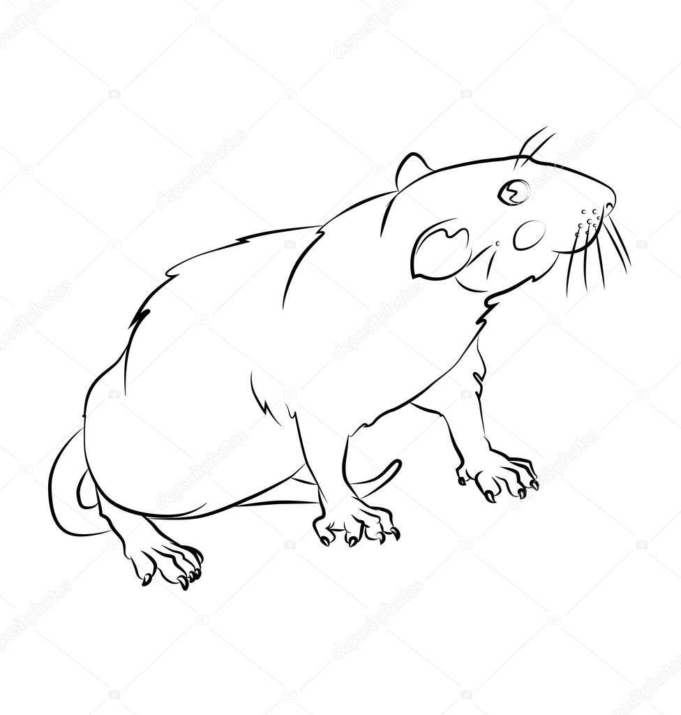 imagen blanco y negro rata — Vector de stock © tatiana3337 #105447010