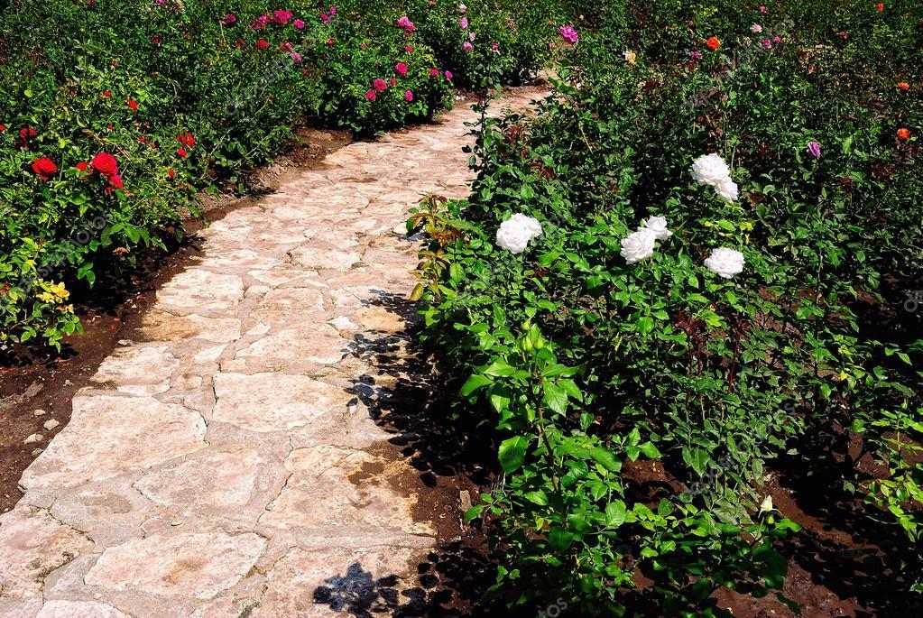 Cespugli fioriti di rose e un sentiero lastricato in un for Cespugli fioriti per giardino