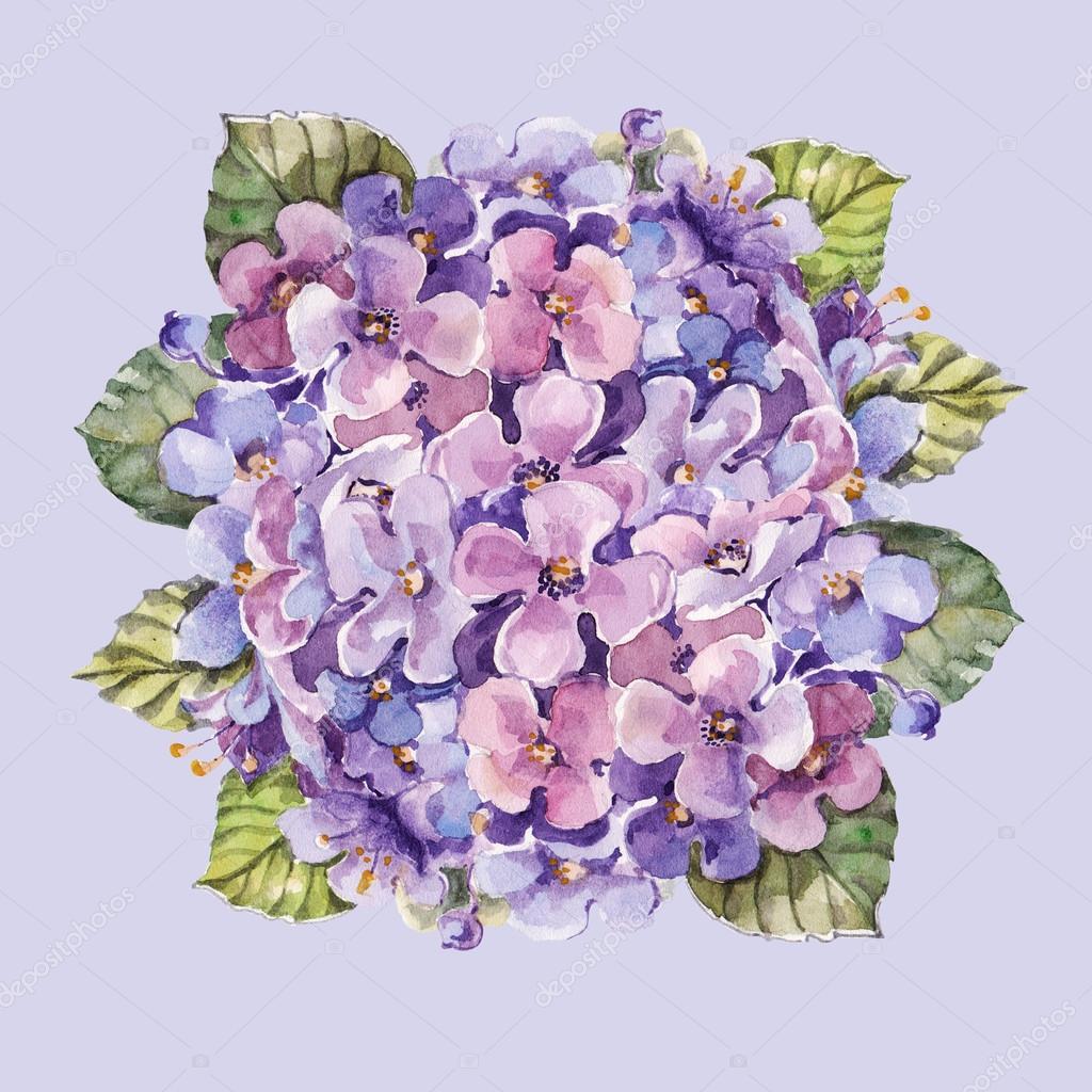 Hydrangea flower watercolor