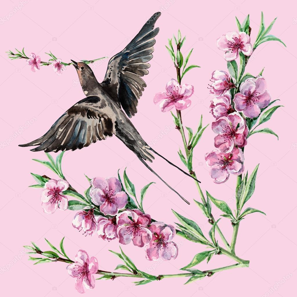 Oiseau Hirondelle Et Fleur De Pecher Aquarelle Modele