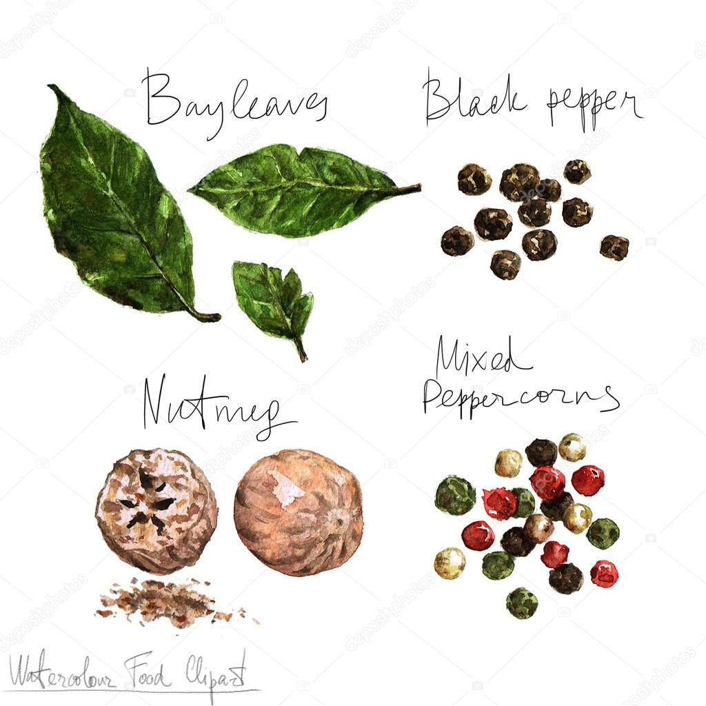 Clipart cibo dell 39 acquerello spezie foto stock for Scarica clipart