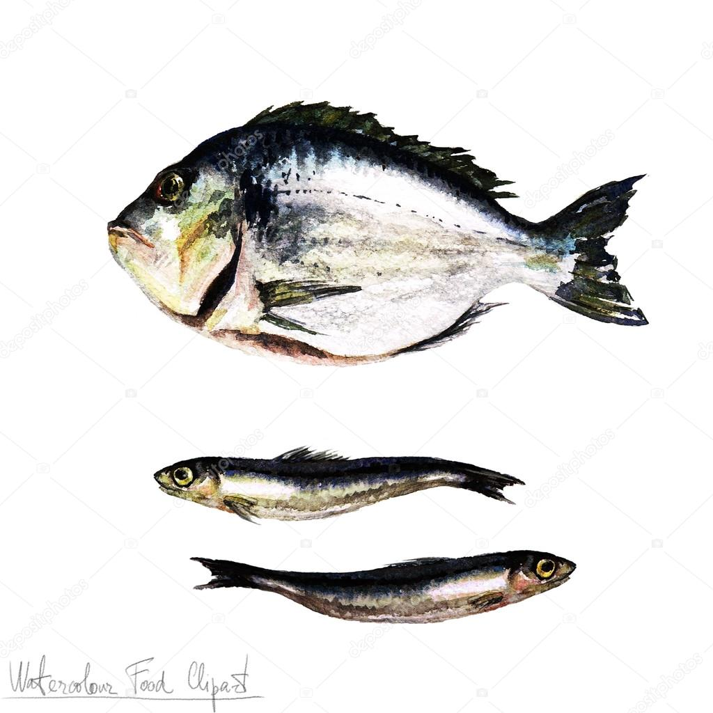 Watercolor Food Clipart - Fish — Stock Photo © nataliahubbert #98904364 for Dried Fish Clipart  55jwn